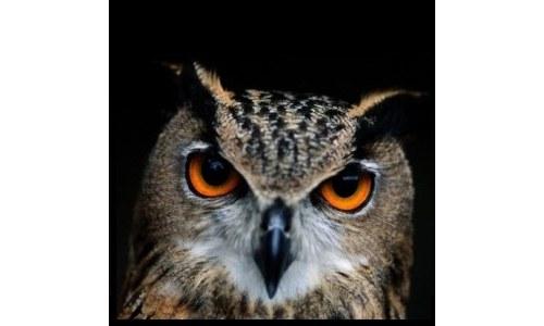 Photograhic Print Close-up of an Owl Photo