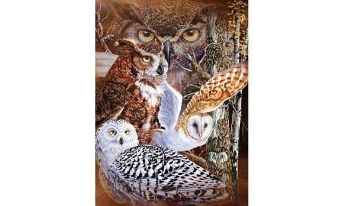 Super Soft Plush Queen Size Owl Blanket