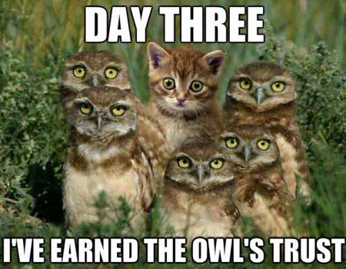 [Image: Cat-Among-Owls.png]